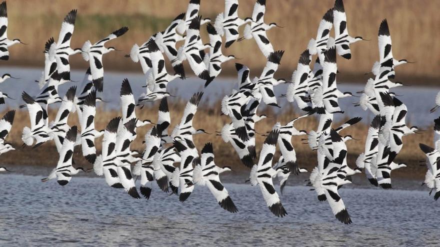 BBVA y SEO/BirdLife crean un oasis por la biodiversidad en Lliria