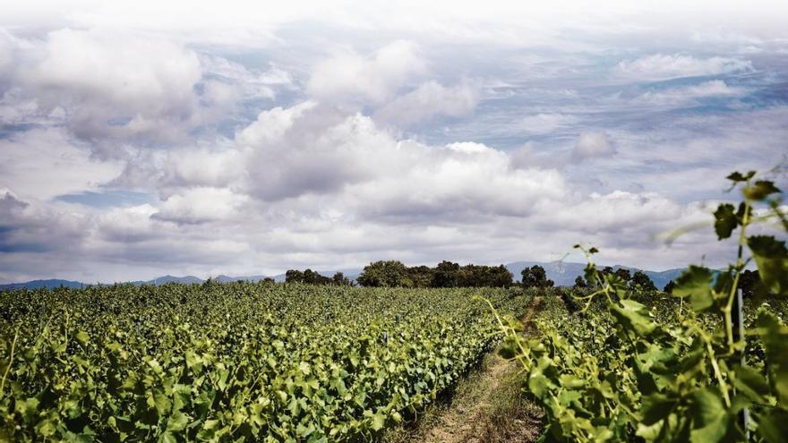 Icnos, un vi amb petjada que fa història