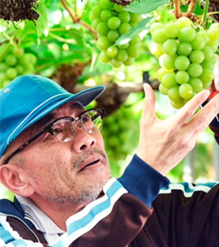 Grapes of Joy