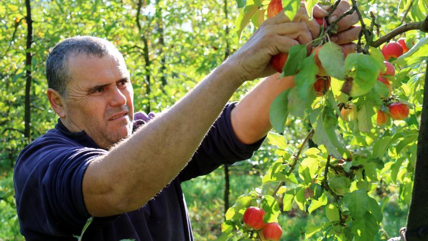 La collita de poma de muntanya serà el 40% menor per culpa de les glaçades de la primavera