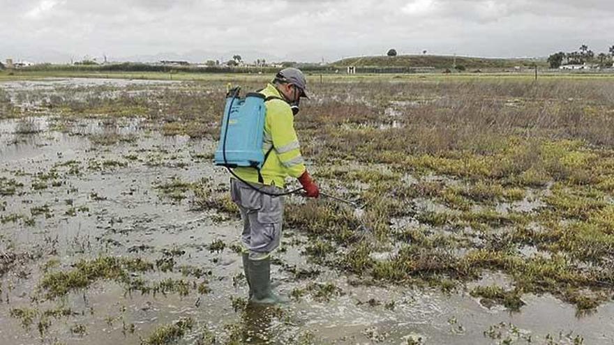 Cort inicia el tratamiento contra larvas de mosquitos en zonas húmedas de Palma