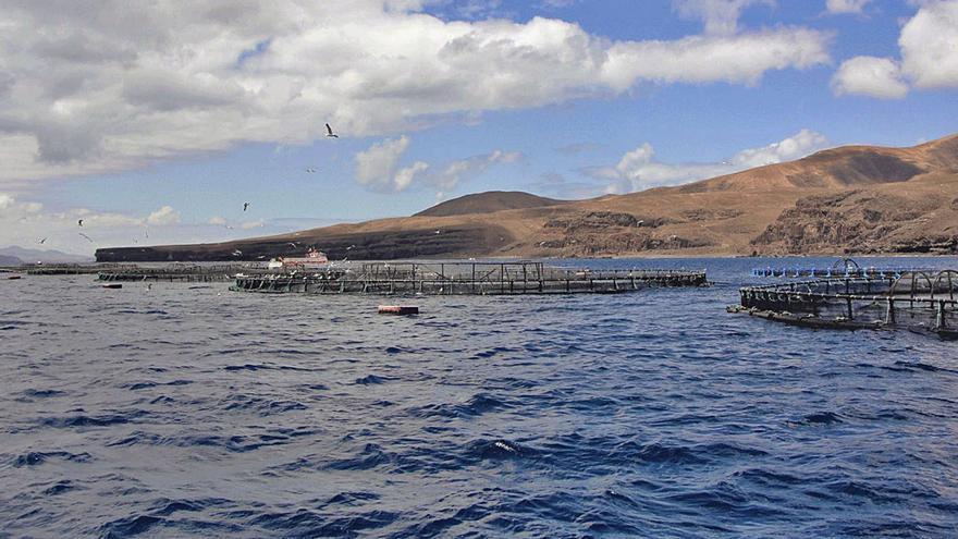 La patronal rechaza que se coloquen las jaulas marinas en las zonas turísticas