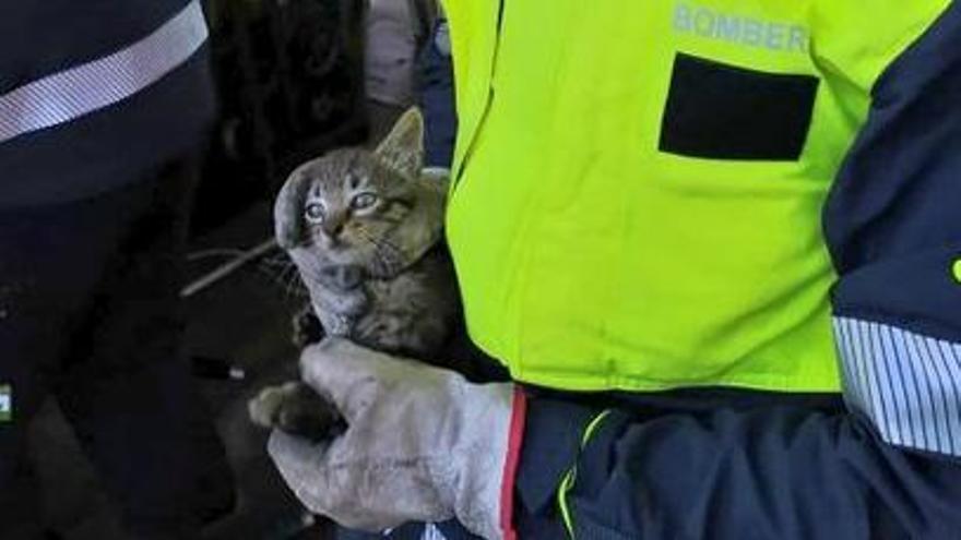 Rescatan a un gato atrapado en un surtidor de gasolina en Inca