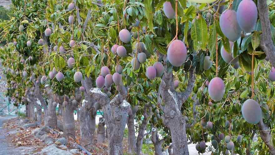 Canarias se encuentra a la cabeza  del país en los robos a fincas agrícolas