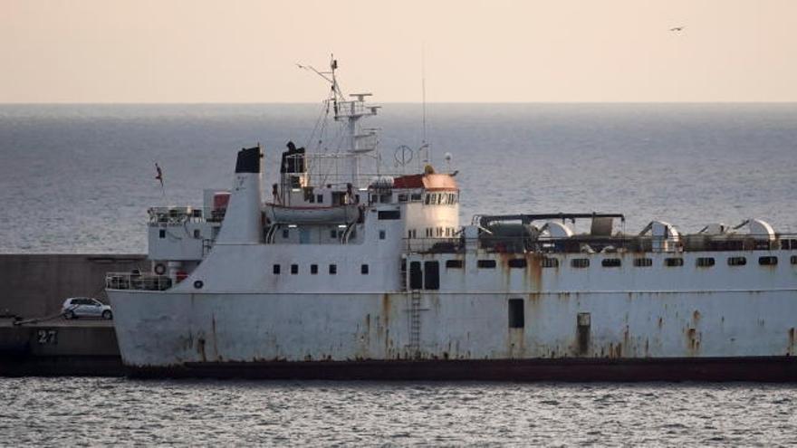 Un laboratorio analiza si las vacas atrapadas en un barco en Cartagena tienen el virus de la lengua azul