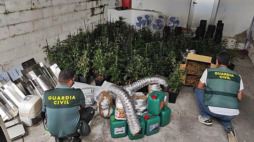 Detenido por cultivar 118 plantas de marihuana en una casa alquilada