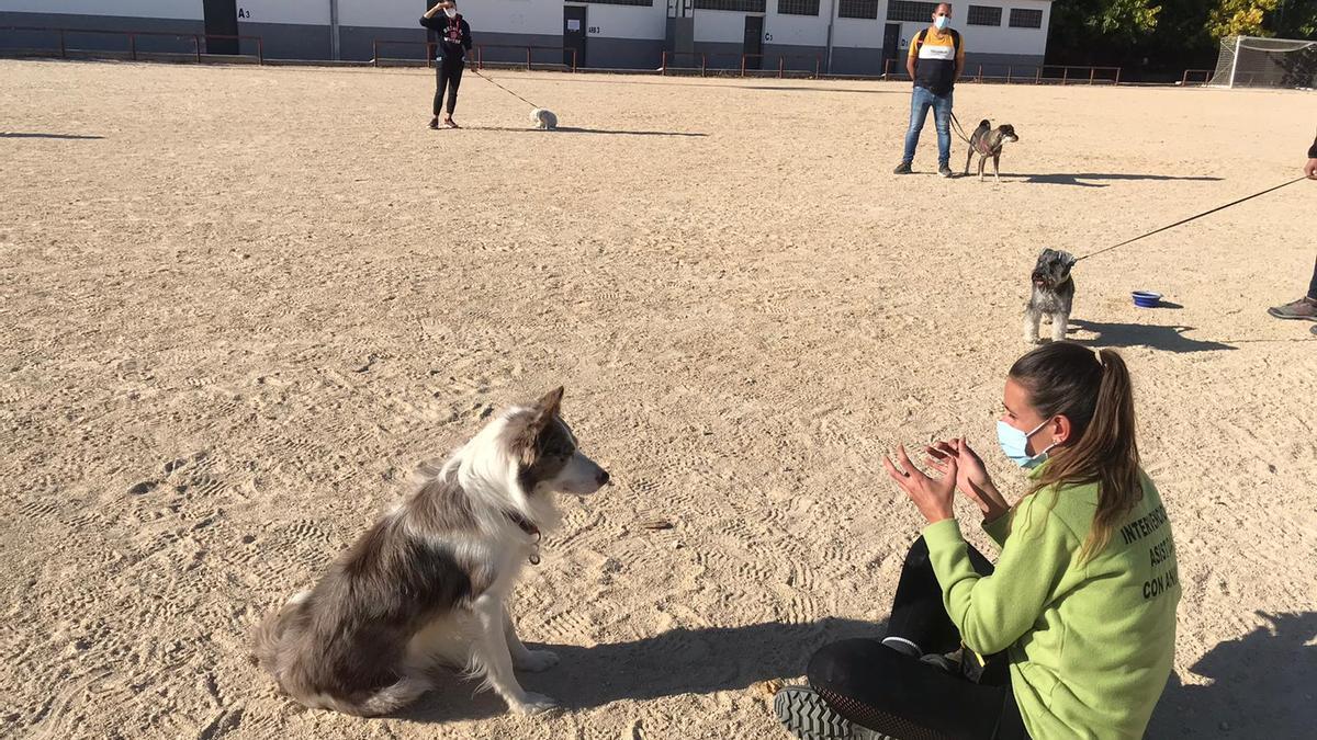 Dueños y perros atienden las indicaciones durante las sesiones del curso.