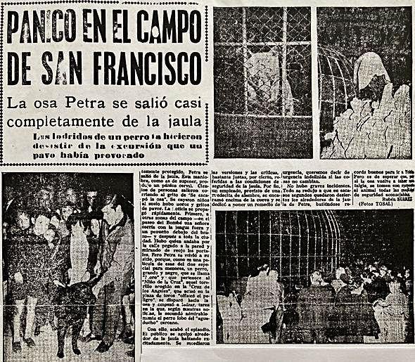 Recorte de LA NUEVA ESPAÑA que cuenta la salida de la osa de su jaula.   T Oviedo