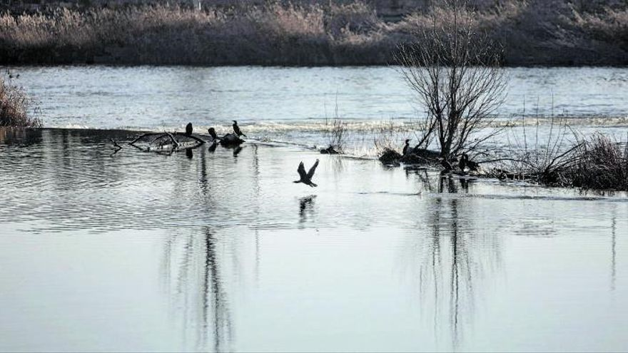 El Duero en Zamora: palacio de invierno para las aves