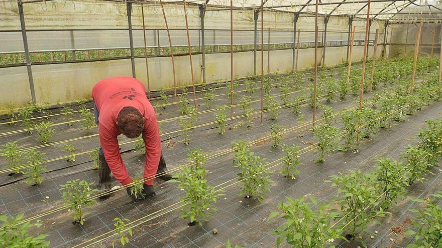 Galicia salva los fondos de la nueva PAC, que primará la agricultura sostenible