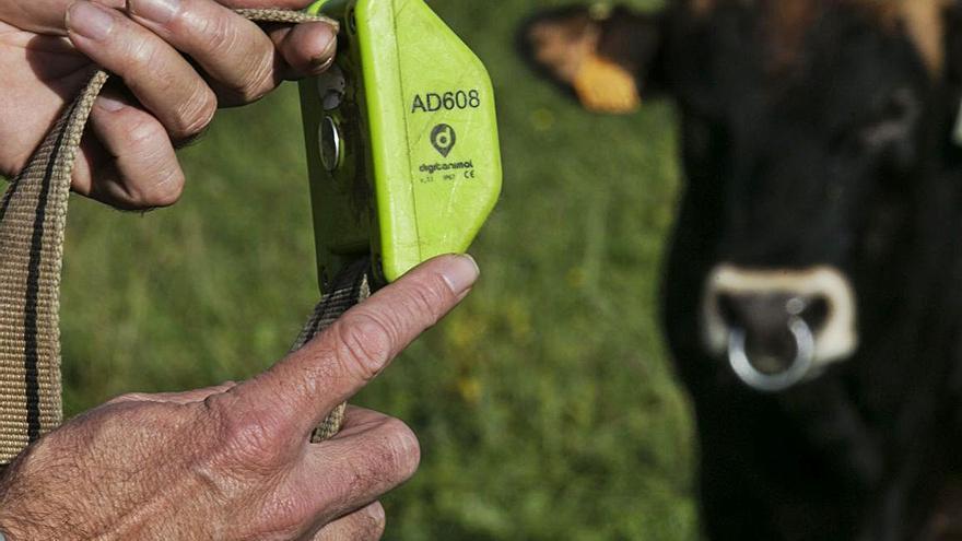 GPS al servicio de la ganadería