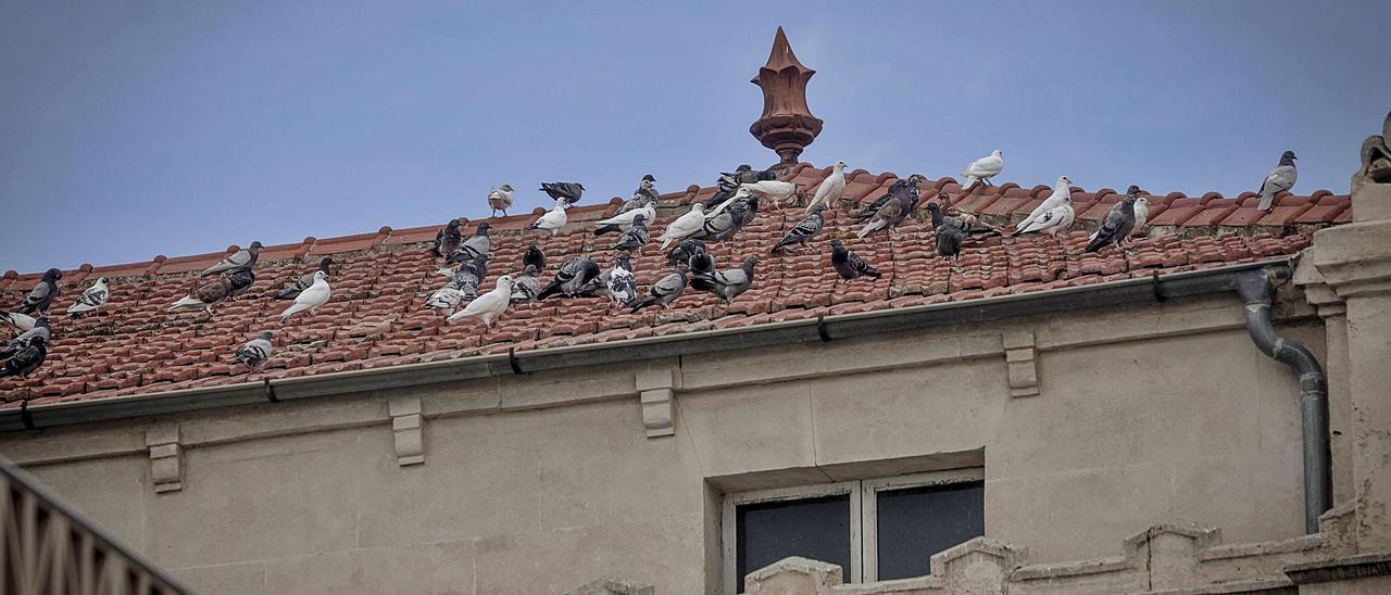En las concentraciones de palomas como en la plaza de España se colocará uno de los dispensadores automáticos.