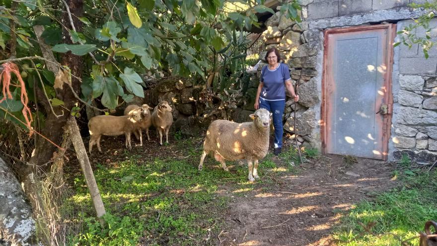 Ganadería en la provincia vacía: uno de cada tres concellos tiene más ovejas y vacas que vecinos