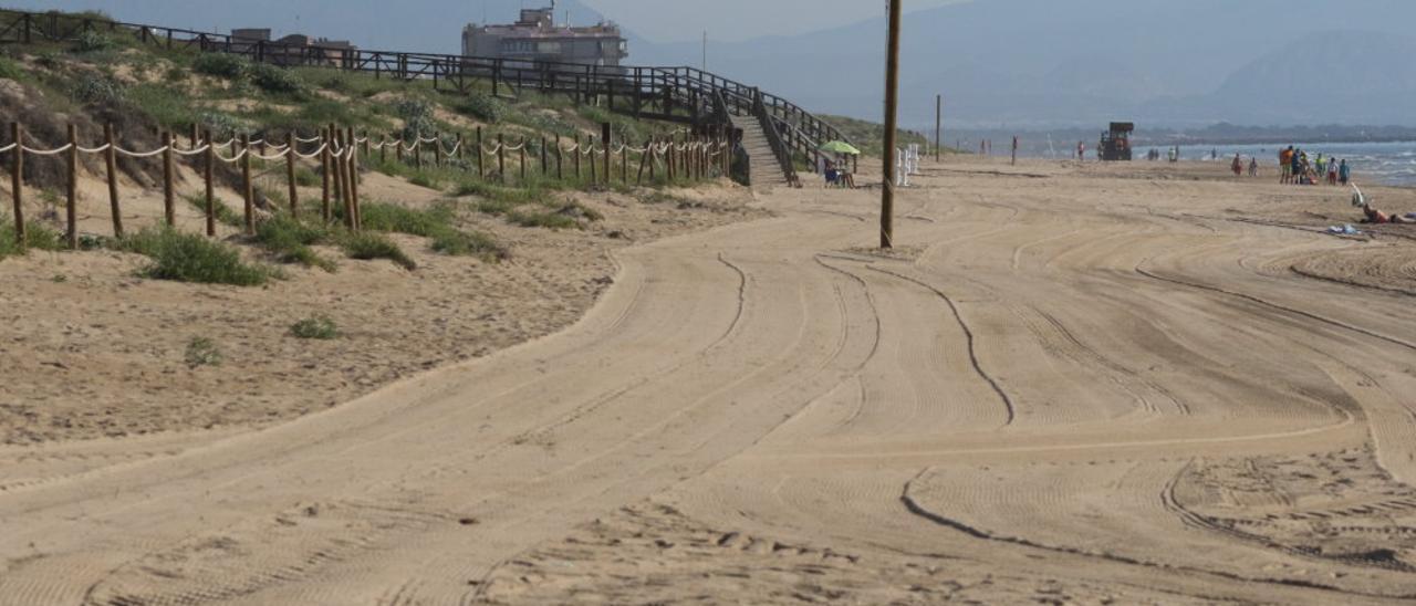 Zona rastrillada con maquinaria pesada en Guardamar. Hasta ahora se respetaba una amplia franja cercana al sistema dunar. El chorlitejo anida directamente sobre la arena