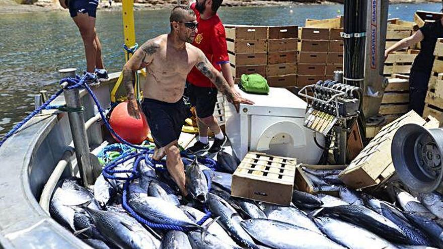 Más de 4.500 kilos de atún en un día