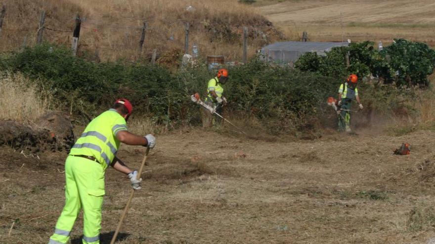 Abierto el plazo para que los ayuntamientos de Zamora soliciten el Plan de Empleo Forestal