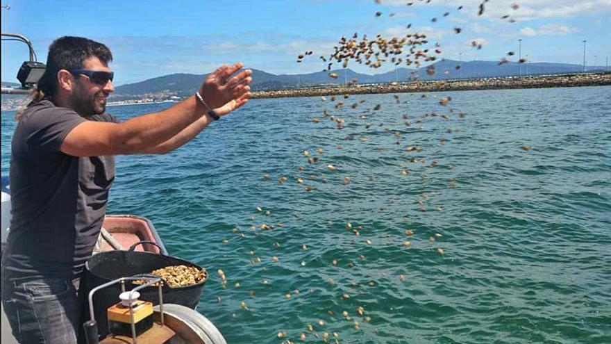 """La ría gana un millón de almejas más y la flota sigue su """"agosto"""" de cornicha en Baiona"""