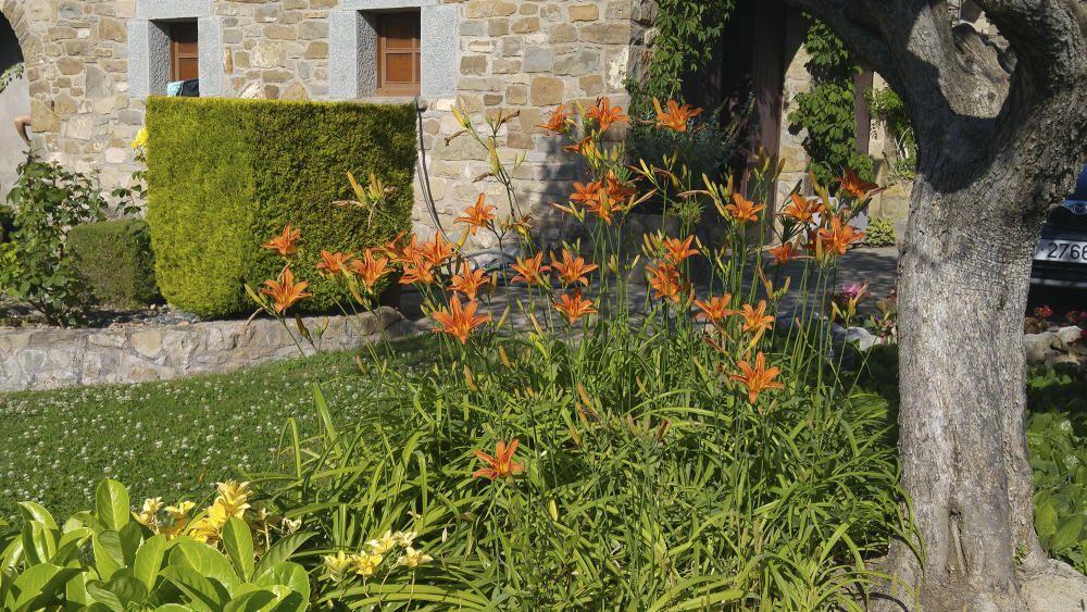 Lliris. Lilium és un gènere amb vora un centenar d'espècies dintre la família de les liliàcies.  S'estenen per gairebé tot Europa, la major part d'Àsia i el Japó, al sud de les muntanyes Nilgiri a l'Índia, i al sud de les Filipines