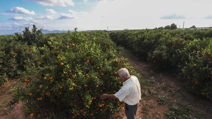 """El campo de Castellón está """"al borde del abismo"""" por las subidas de costes"""