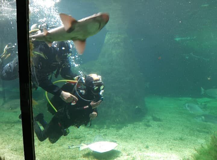 Buceadores en el tanque de los tiburones.