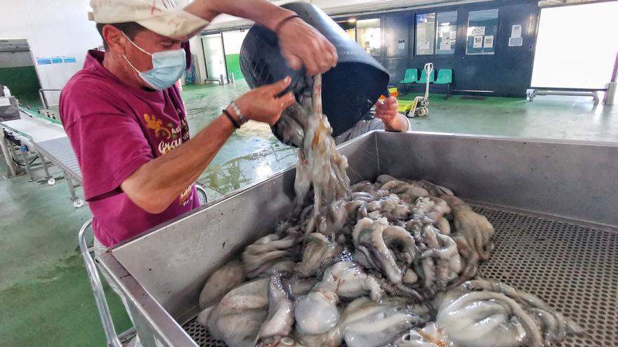 """El """"retail"""" llama al pulpo gallego, que se importa y se pesca menos"""