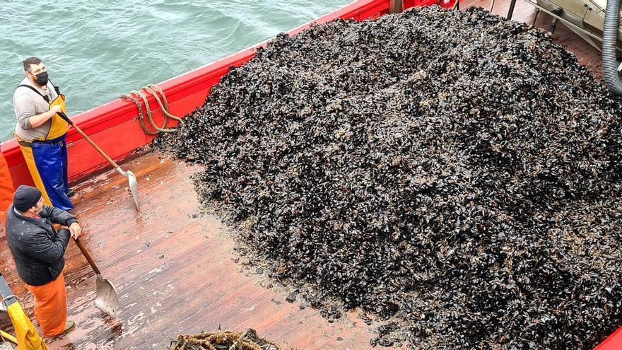 Intensa descarga de mejillón en los puertos gallegos