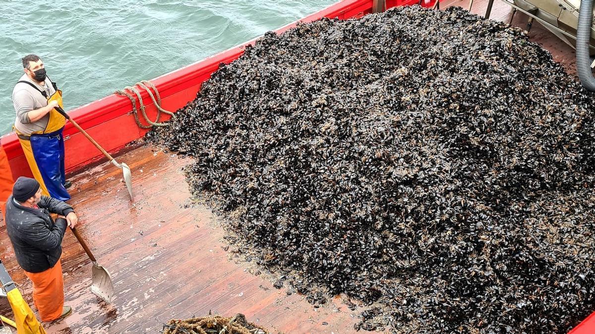 Descarga de una barcada de molusco destinado a Conservas Friscos a través del Consello Regulador Mexillón de Galicia.