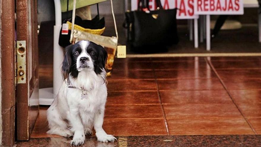Un perro, en la entrada de una tienda de ropa del casco de La Laguna.