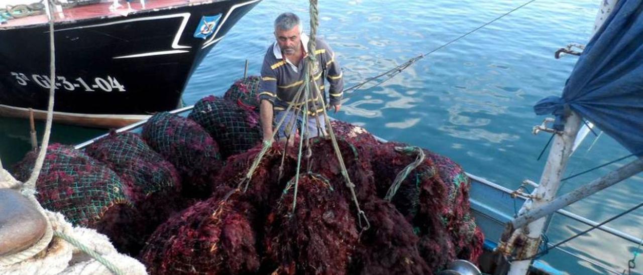 José Artime descargando ocle en el puerto de Candás, el pasado verano.