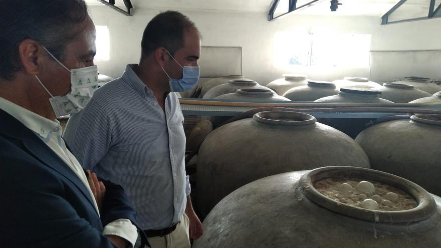 """La Junta señala que la provincia de Córdoba es """"uno de los destinos con mayor tradición en el cultivo de vino"""""""