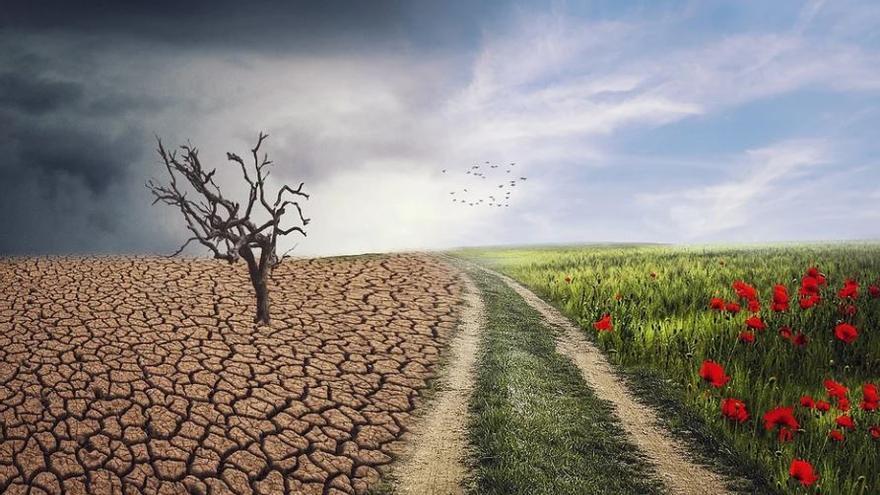 """L'escalfament global és """"l'amenaça més gran per a la salut"""" de la humanitat, segons l'OMS"""