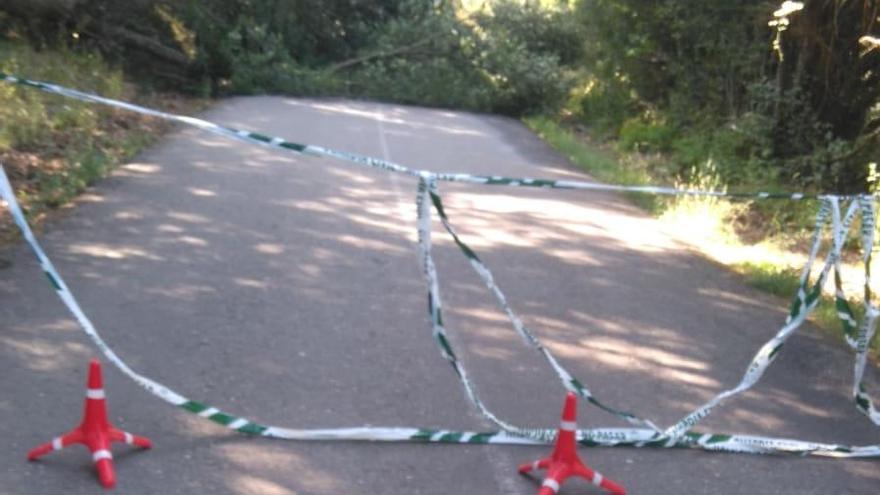 Las ramas de árboles caídas en la carretera que une Castellanos con Sampil obligan a cortar el tráfico