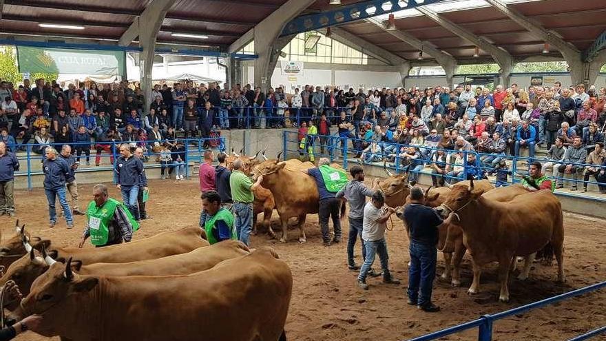 La subasta de asturiana de los valles de Cangas del Narcea mueve 77.000 euros
