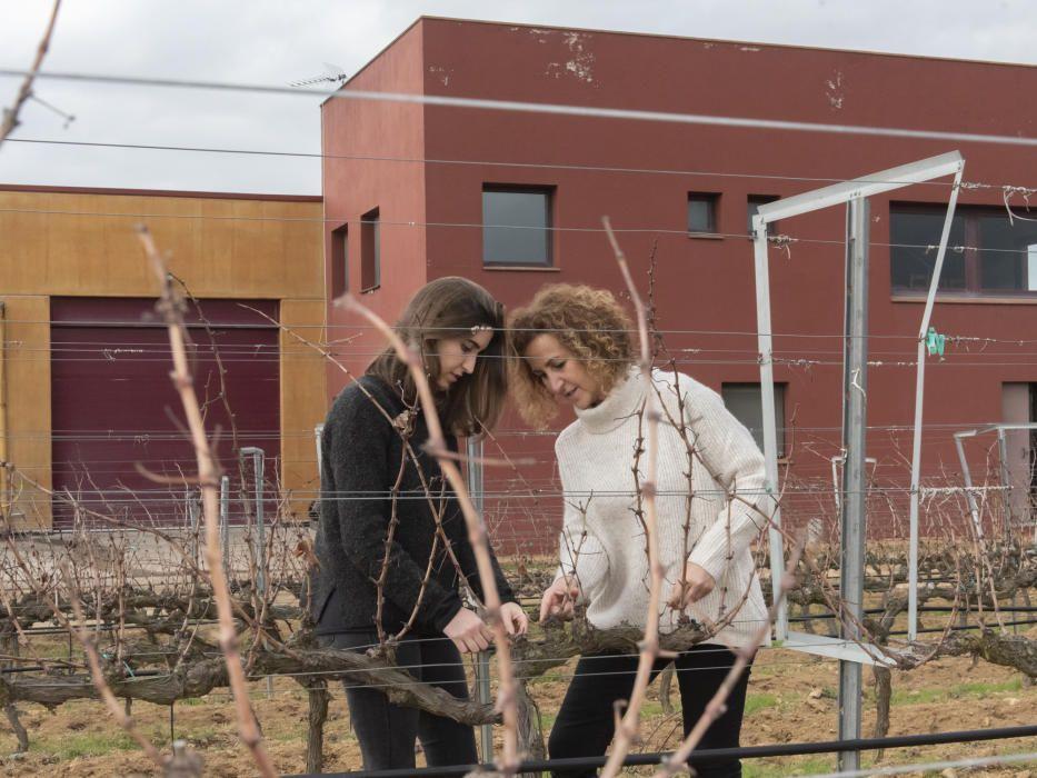 Casacuberta i Pena al celler i a les vinyes.