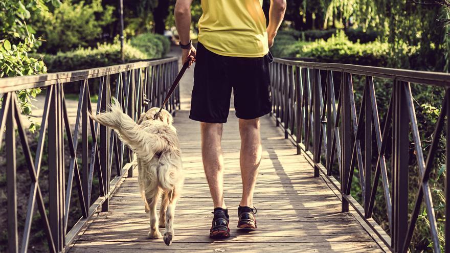 En la III Can We Run se estrechan lazos entre la mascota y su dueño