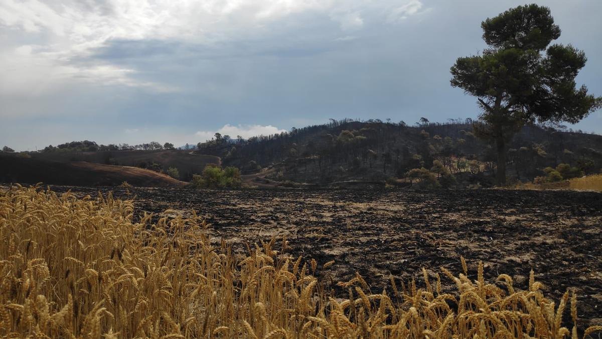 Imatge del terreny calcinat a l'àrea de Bellprat