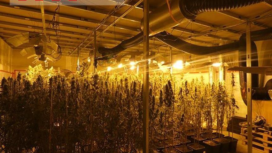 Marihuana «made in Xina» des de Santa Llogaia d'Àlguema