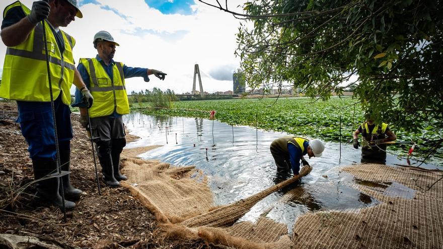 Una manta vegetal cubrirá la orilla del Guadiana