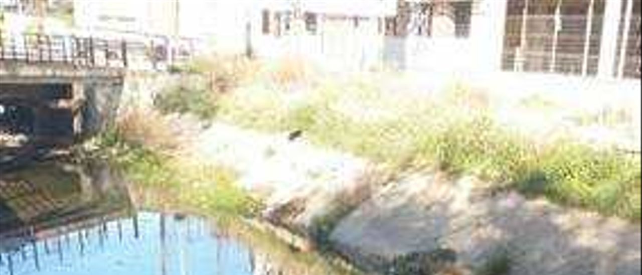El barrio de Quatre Camins de Carcaixent critica la suciedad del barranco de Gaianes