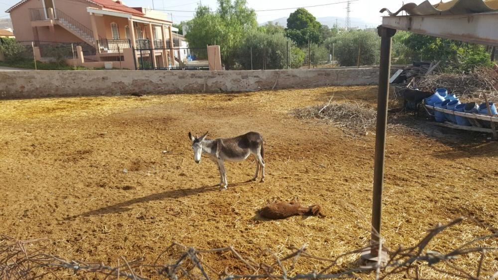 Denuncia de maltrato animal en una granja de Lorca