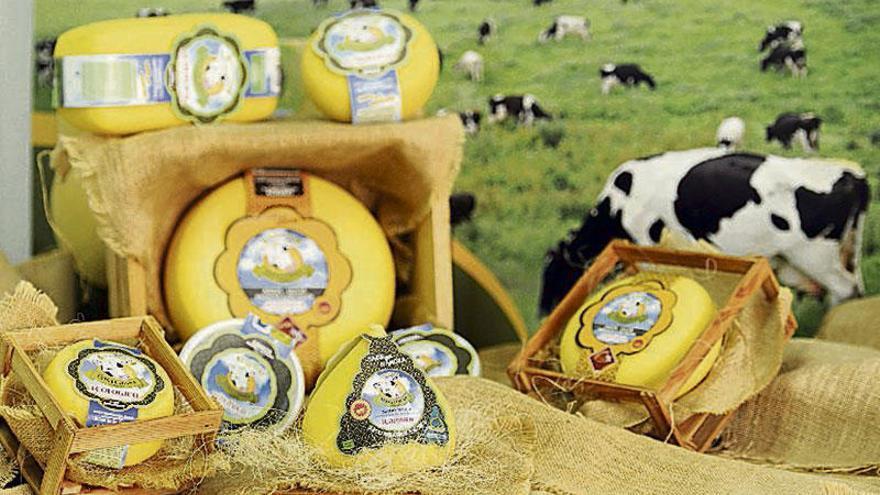 Pioneiros na produción de queixo ecolóxico da denominación Arzúa Ulloa