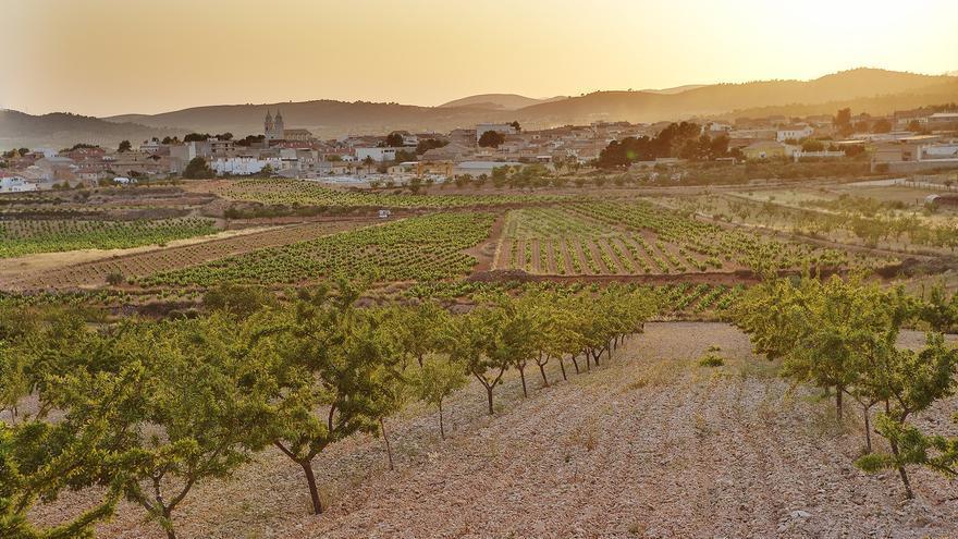 Saborea la riqueza natural de la Comunitat Valenciana a través de sus vinos