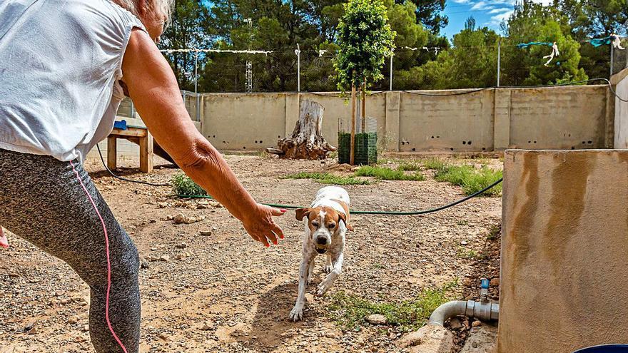 Siete perros llevan dos años sin poder ser adoptados en La Nucía a la espera de un juicio por maltrato