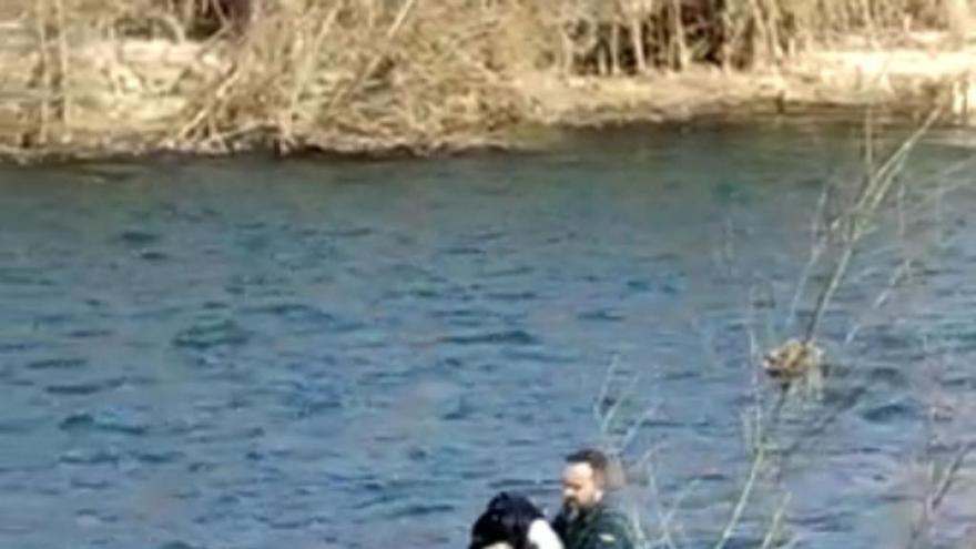 La Guardia Civil recupera una cigüeña herida que estaba en el interior del río Órbigo