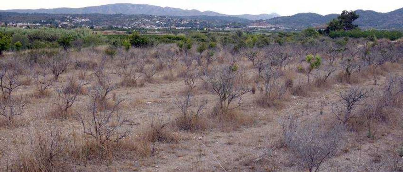 La sequía se recrudece y obliga  a la CHJ a perforar nuevos pozos