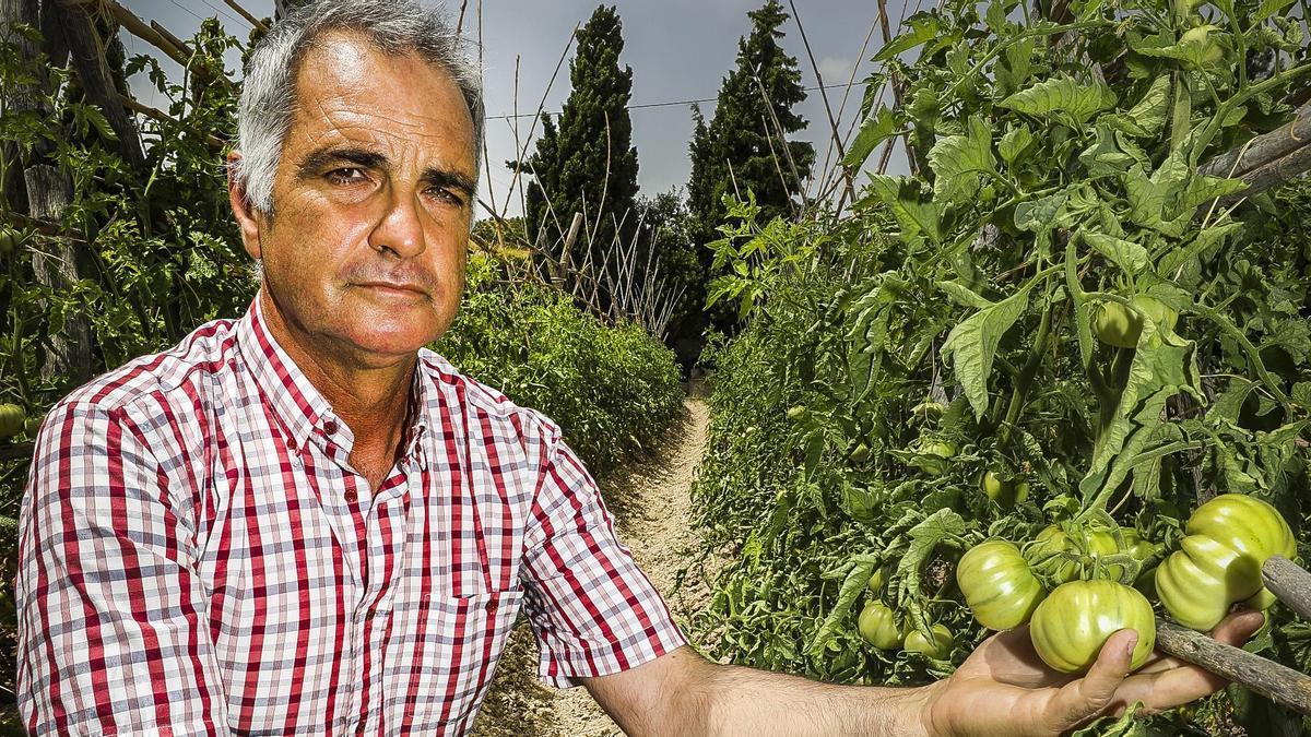 José Antonio Rico, presidente del Comité de Agricultura Ecológica de la Comunitat Valenciana