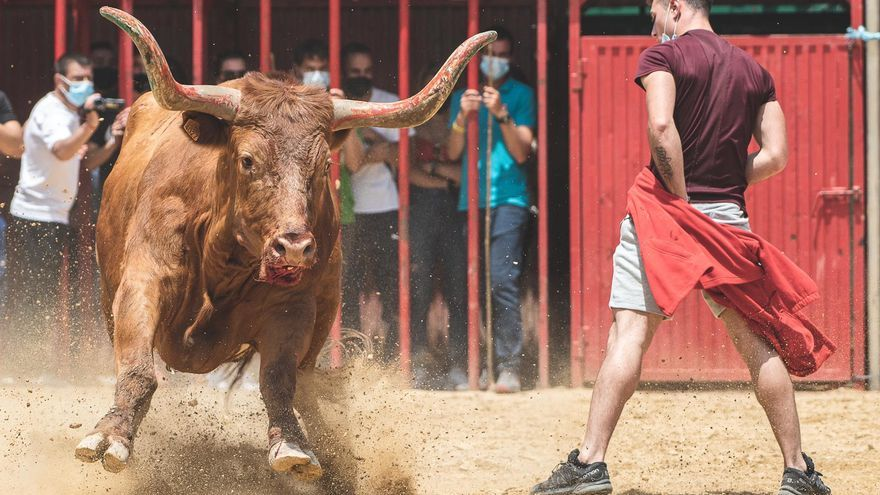 Los temidos toros de Arriazu llegan el próximo sábado a Castelló