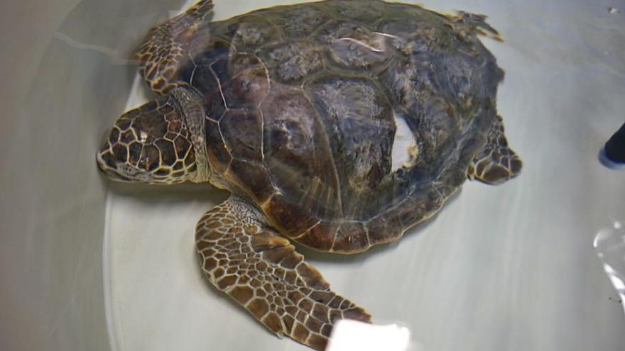 Über Wasser gehalten im Palma Aquarium auf Mallorca