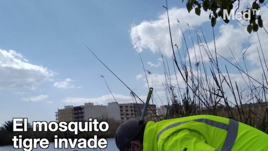 Frente común contra los mosquitos de Generalitat, Diputación y ayuntamientos en Castellón