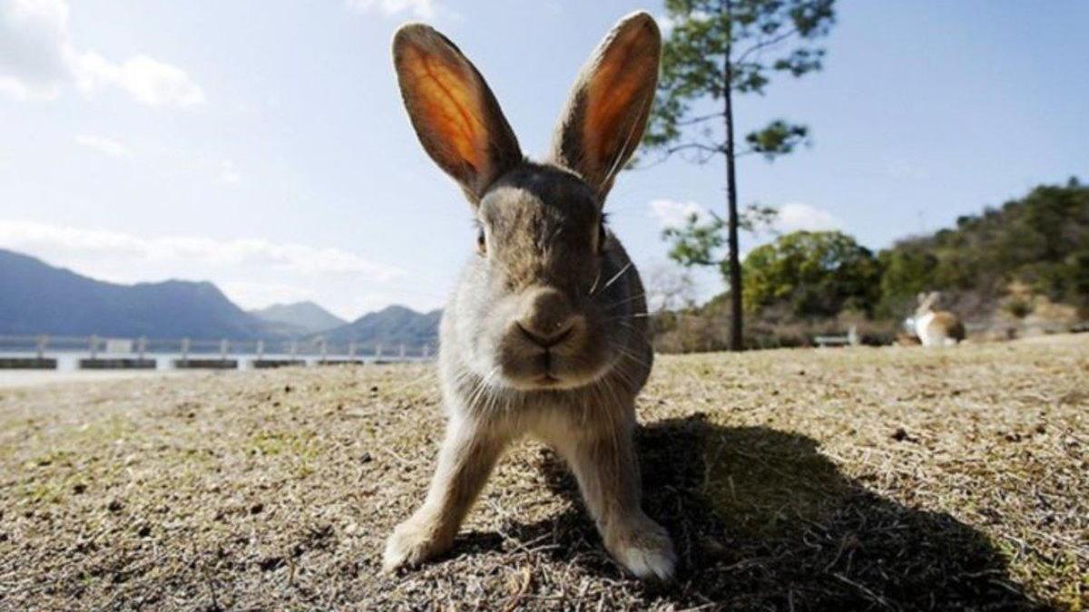 Un asesino en serie de conejos siembra el terror en la Bretaña francesa
